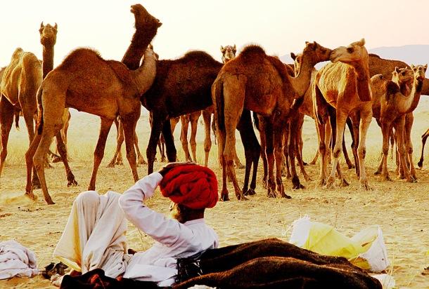 The Pushkar Fair