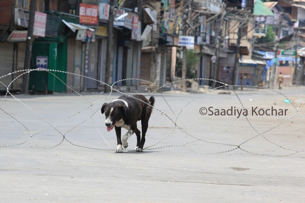 7th day of curfew in Srinagar.