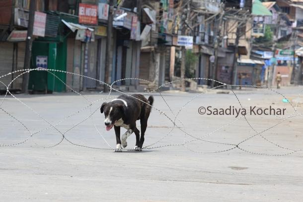 7th day of curfew in Srinagar.